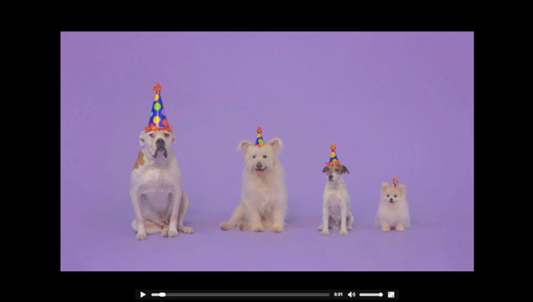 dogs barking birthday song